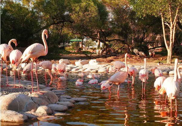 Al-Areen-Wildlife-Park-and-Reserve